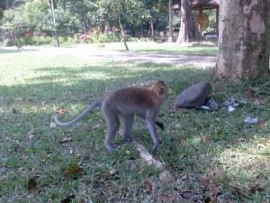 funcky monkey
